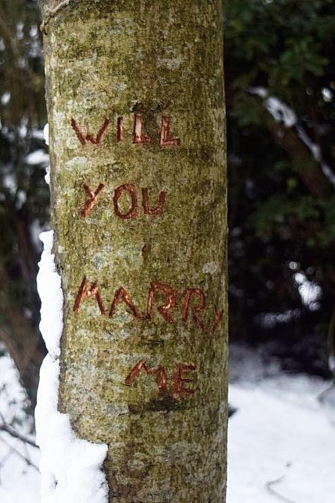 romantic ways to propose tree park proposal carving
