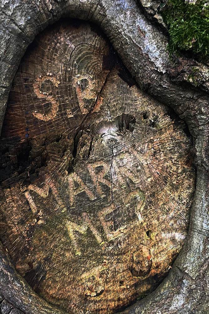 romantic ways to propose tree proposal carving
