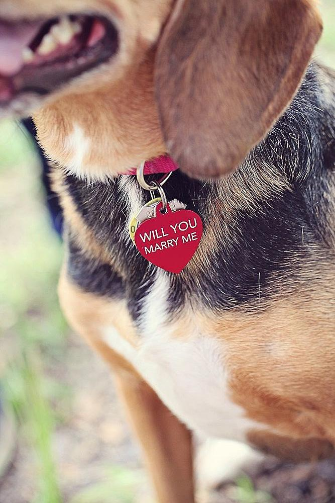 wedding proposal ideas dog with engagement ring surorise