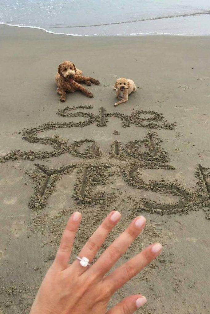 beach proposal ideas best proposing beach photo with pets
