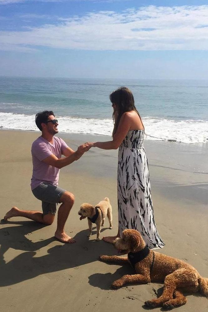 beach proposal ideas nice proposing with her pets on the beach