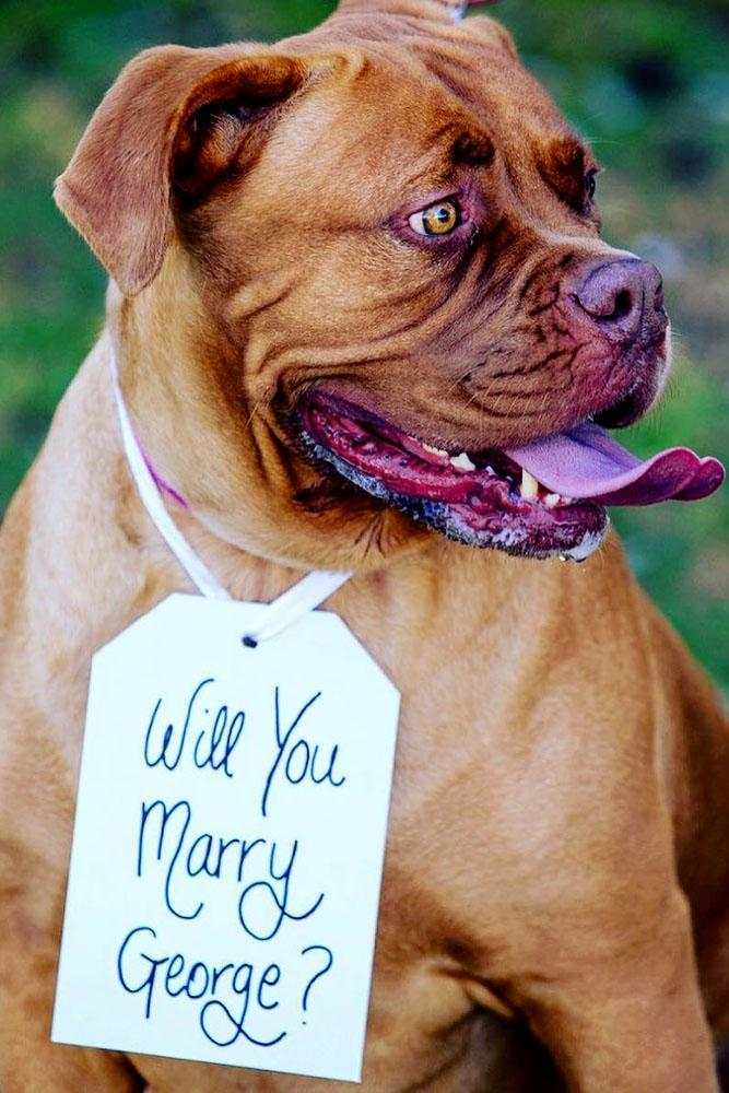 engagement photo ideas dog with card and will you marry me