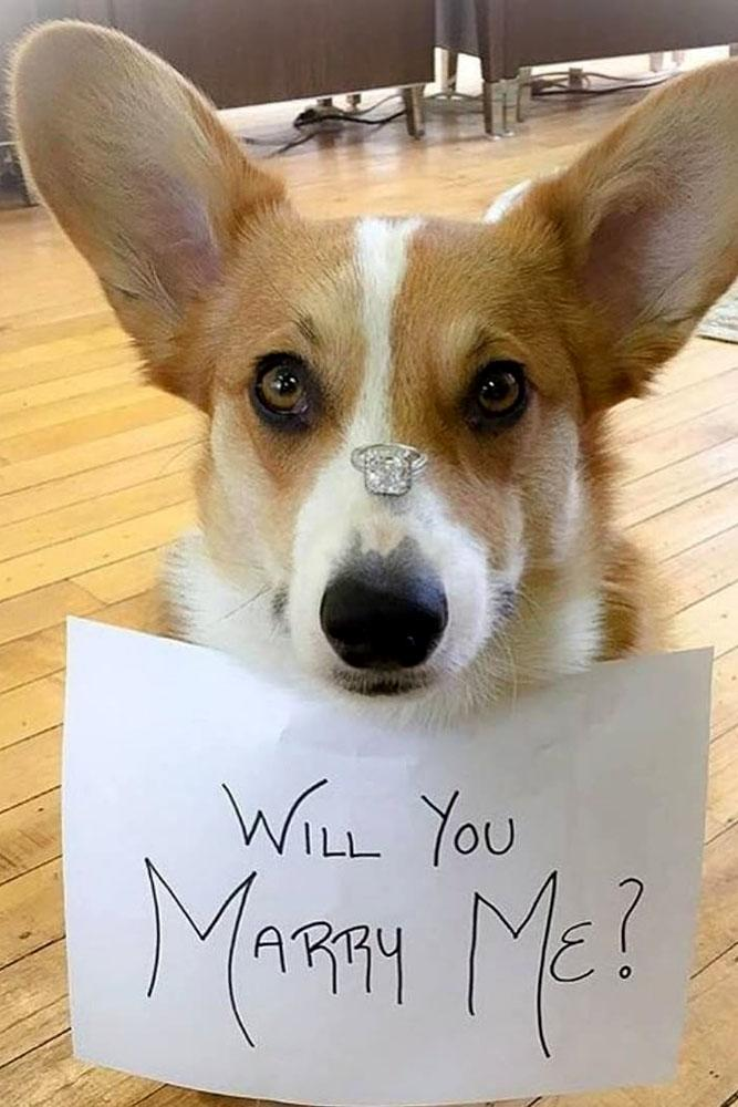 engagement photo ideas dog with engagement rings and card