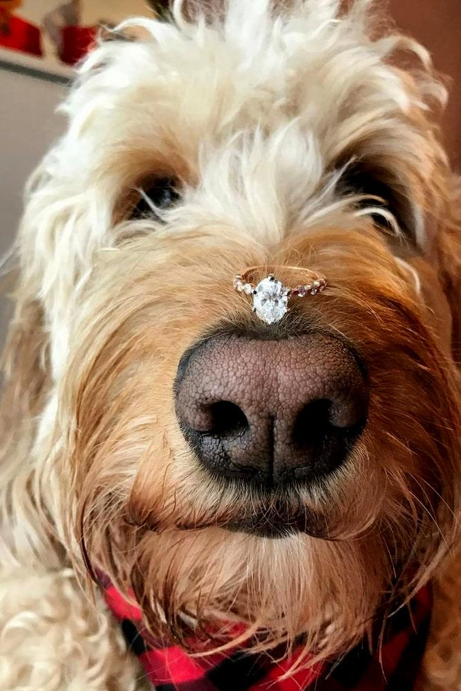 engagement photo ideas engagement ring is on the dogs nose