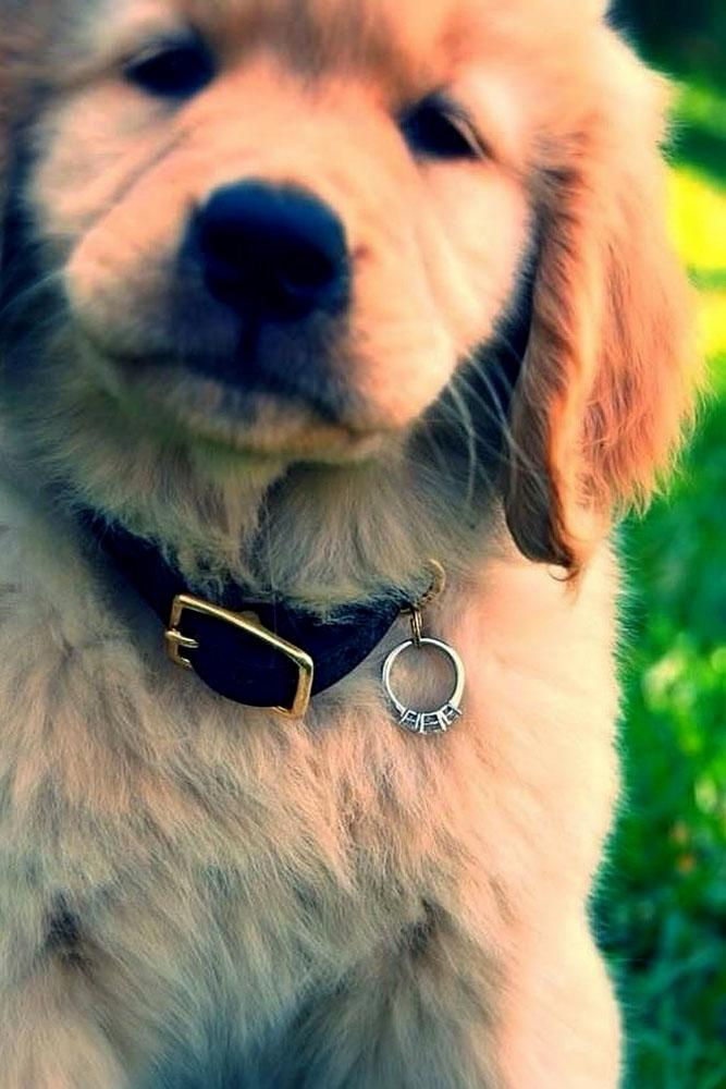 engagement photo ideas pet with proposal ring
