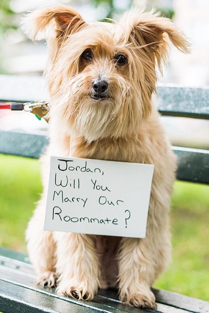 best proposal ideas romantic propose with the dog