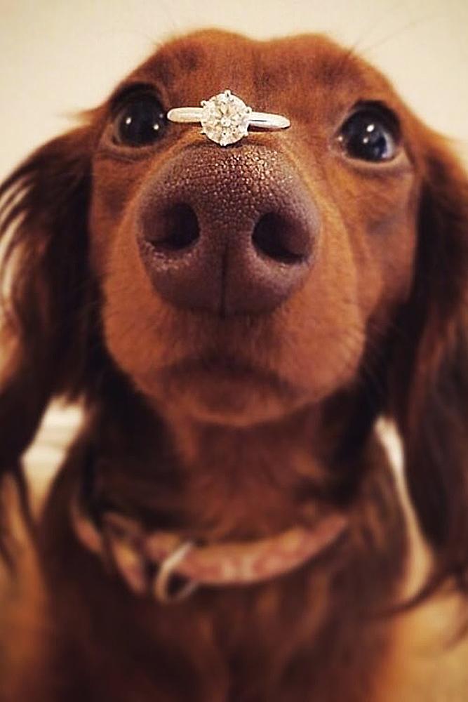 engagement photos pet dog cute ring