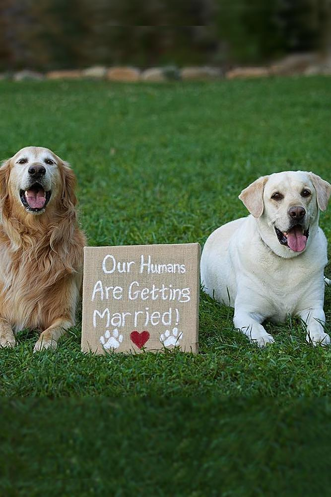 engagement pictures dogs and proposal signs