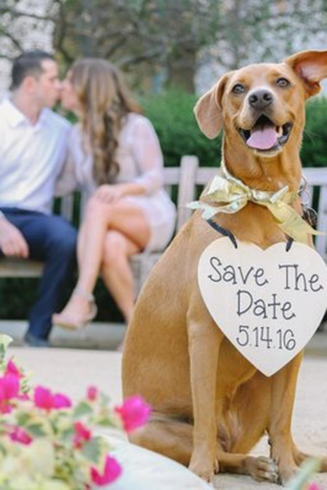 save the proposal date engagement photo with dog
