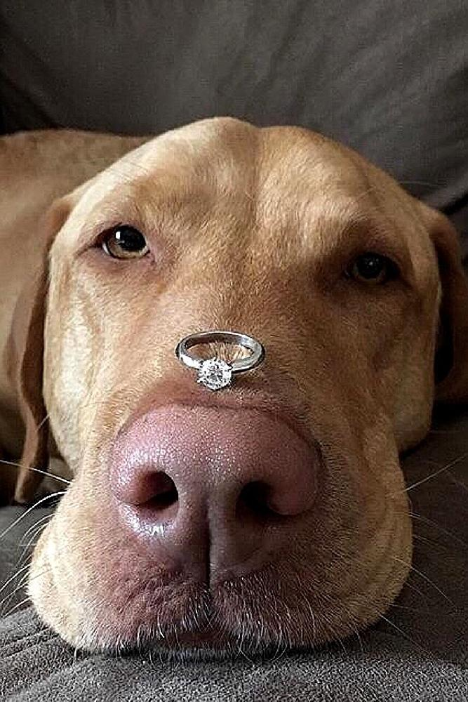 unique engagement ideas ring on the dogs nose white gold round cut diamond solitaire