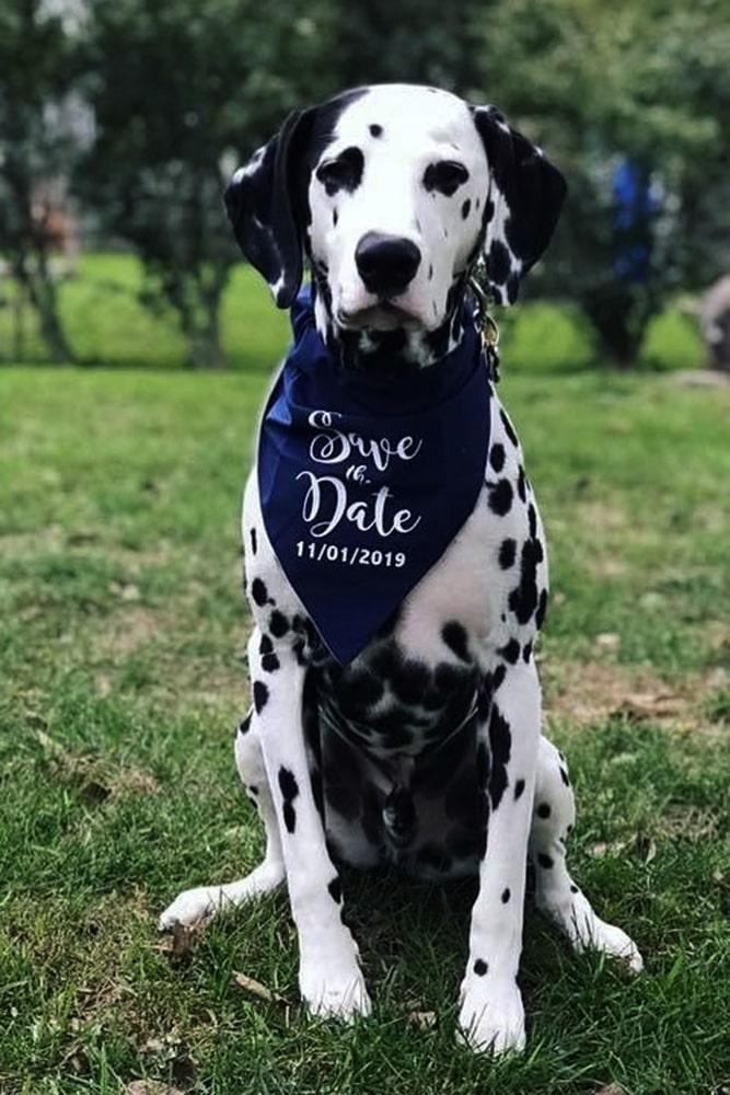 save the date ideas save the proposal date engagement photos proposal speech best proposal ideas creative save the date photos with pets