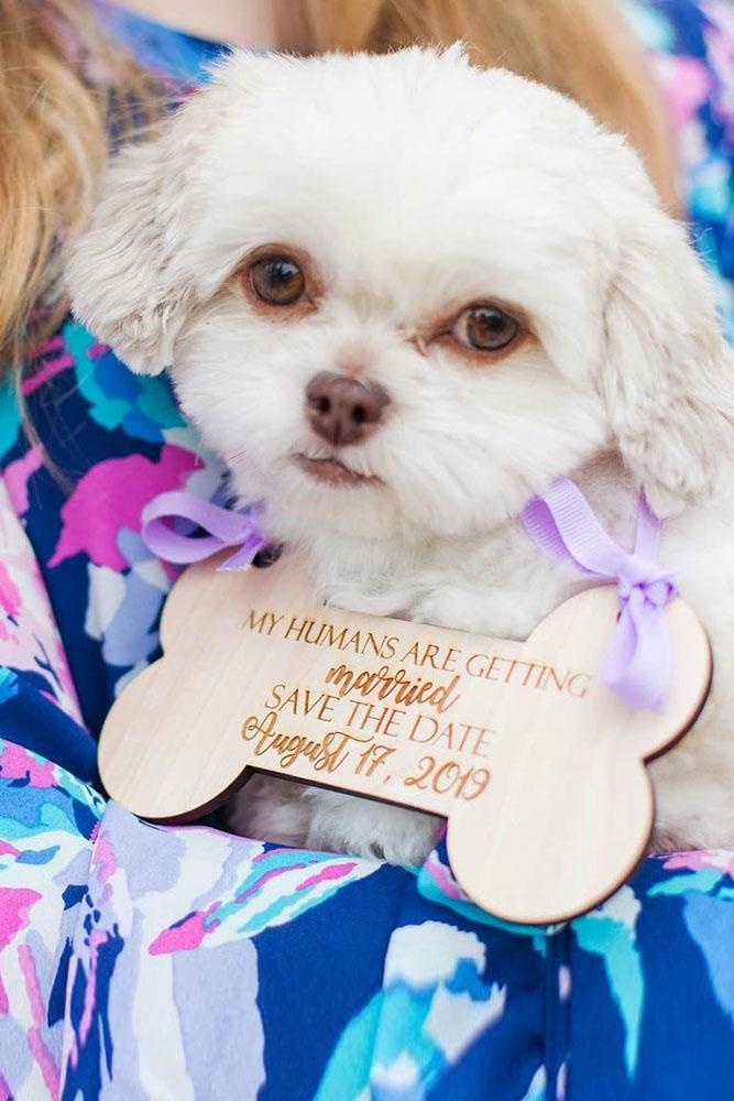 save the date ideas save the proposal date engagement photo ideas best proposal ideas marriage proposal with pets