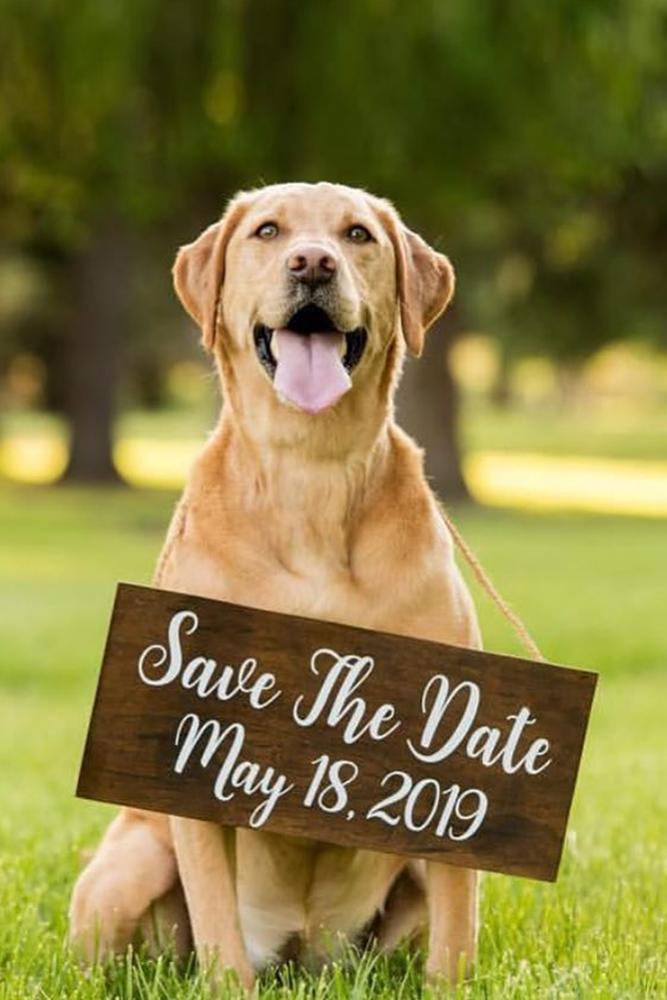 save the date ideas with dogs save the proposal date engagement announcement